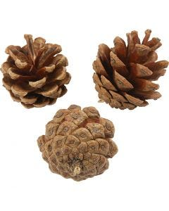 Pine Cones, D: 40 mm, 500 g/ 1 pack