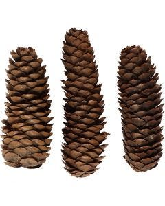 Abies Cone, D: 40 mm, 300 g/ 1 pack