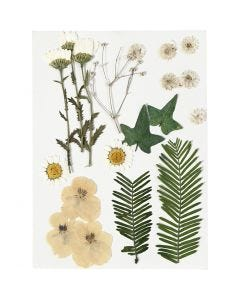 Pressed Flowers and leaves, off-white, 19 asstd./ 1 pack