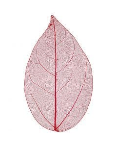 Skeleton leaves, L: 6-8 cm, red, 20 pc/ 1 pack
