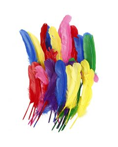 Feathers, L: 20 cm, assorted colours, 36 pc/ 1 pack