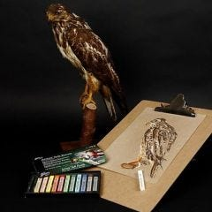A Bird of Prey with Gallery Soft Pastels