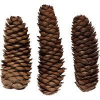 Abies Cone, D: 40 mm, 100 g/ 1 pack