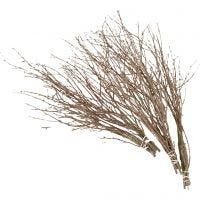 Birch Branches, L: 50-60 cm, 20 pc/ 1 pack