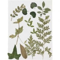 Pressed leaves, green, 1 pack
