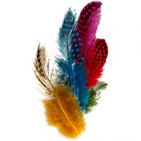 Guinea fowl feathers, assorted colours, 3 g/ 1 pack