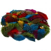 Guinea fowl feathers, assorted colours, 50 g/ 1 pack